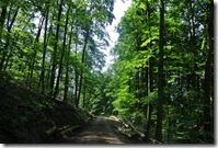 Moselsteig Konz - Trier - Waldweg