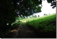 Moselsteig Konz - Trier - Raus aus dem Wald