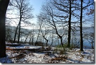 Laacher See - Ufer im Winter