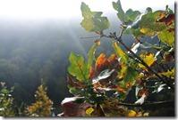 Traumpfad Bleidenberger Ausblicke - Herbstlaub