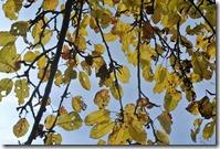 Traumpfad Bleidenberger Ausblicke - gelbe Blätter