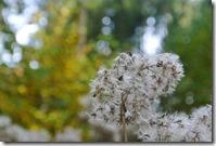 Traumpfad Bleidenberger Ausblicke - Herbst