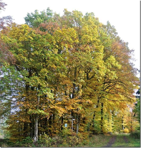 Traumpfad Bleidenberger Ausblicke - Herbstwald