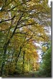 Traumpfad Bleidenberger Ausblicke - Wald