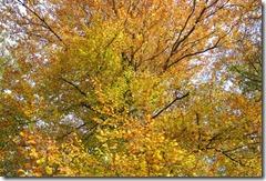 Traumpfad Bleidenberger Ausblicke - rot-gelb-orange