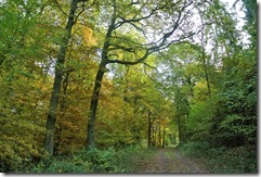 Traumpfad Bleidenberger Ausblicke - auch noch grün