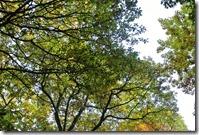 Traumpfad Bleidenberger Ausblicke - grünes Blätterdach