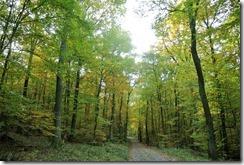 Traumpfad Bleidenberger Ausblicke - Laubwald