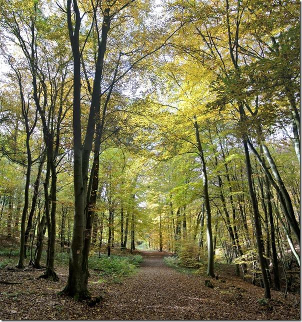 Traumpfad Bleidenberger Ausblicke - Herbst im Wald