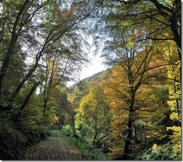 Traumpfad Bleidenberger Ausblicke - Talweg