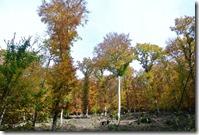 Traumpfad Bleidenberger Ausblicke - Herbstfarben
