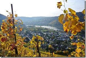Traumpfad Bleidenberger Ausblicke - Weinlaub