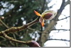 Fürstenweg -  es wird Frühling