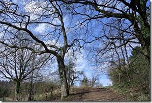Fürstenweg -  Bäume und Himmel