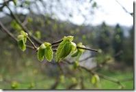 Rheinsteig (Königswinter - Bad Honnef) - der Frühling