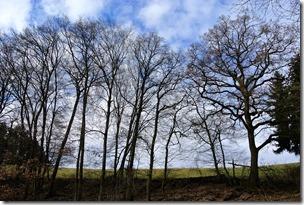 Wiesenweg Kürrenberg - Bäume