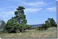 Traumpfad Bergheidenweg - Heidelandschaft