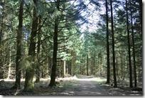 Traumpfad Bergheidenweg - Waldweg