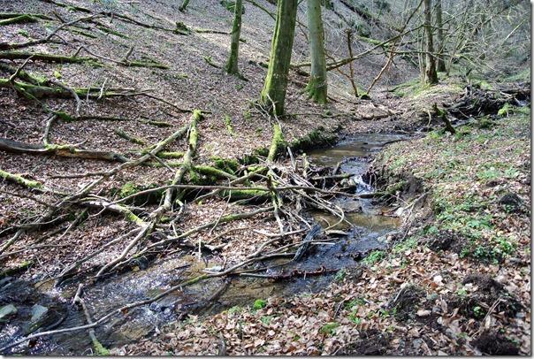 Traumpfad Bergheidenweg - Selbachtal