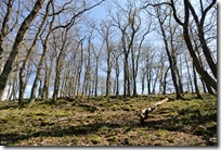Cochemer Ritterrunde - Wald