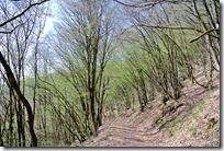 Grafschaft Pfad Manderscheid - Wandern im Wald