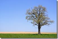 Grafschaft Pfad Manderscheid - Baum