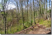 Rheinsteig (Rengsdorf - Sayn) - Waldweg