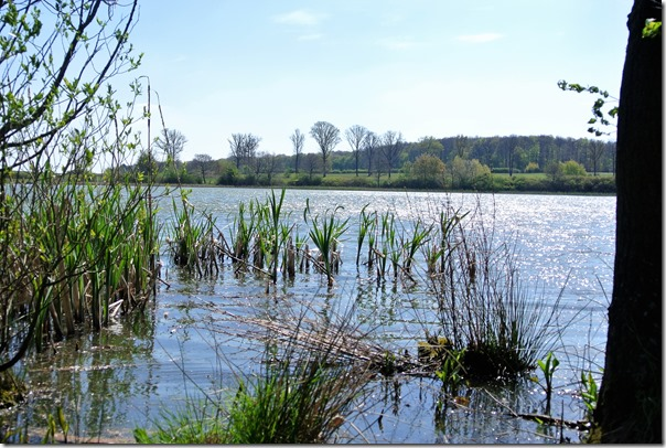 Vinxtbachtal Extratour - Uferansicht Roddermaar