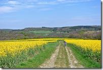 Vinxtbachtal Extratour - Feldweg