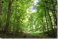 Höhenweg Laacher See - Waldblicke