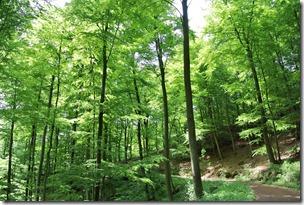 Höhenweg Laacher See - Waldimpression