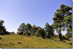 Traumpfad Virne-Burgweg - Heidelandschaft