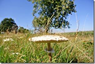Traumpfad Virne-Burgweg - Pilz und Heide