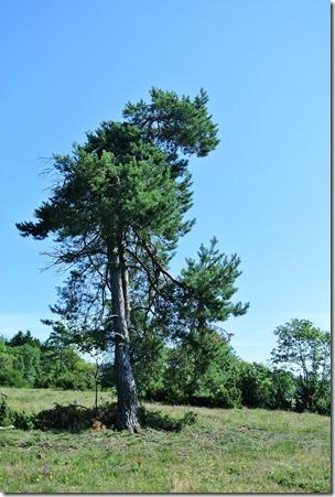 Traumpfad Virne-Burgweg - Heidebaum