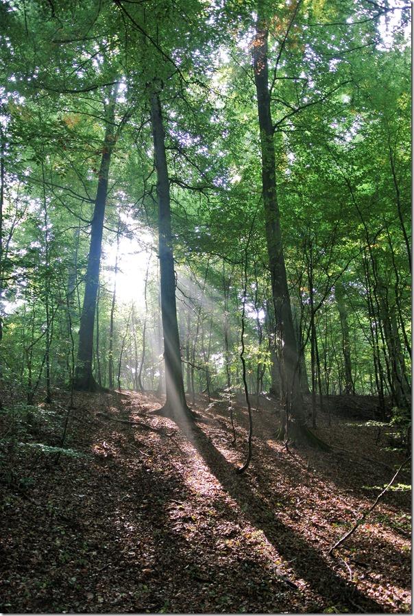Traumpfädchen Kleiner Stern - Waldweg