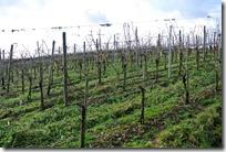 Traumpfädchen Moseltraum - Wein
