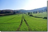 Traumpfädchen Riedener Seeblick - Felder im Herbst