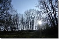 Traumpfädchen Riedener Seeblick - Wald mit Sonne