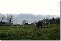 Traumpfädchen Langscheider Wacholderblick - Pferdekoppel