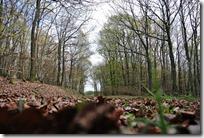 Traumpfädchen Langscheider Wacholderblick - Herbstwald