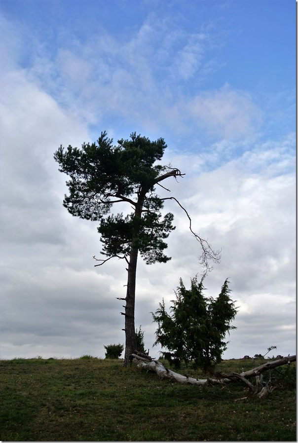 Traumpfädchen Langscheider Wacholderblick - Wabelsberger Heide