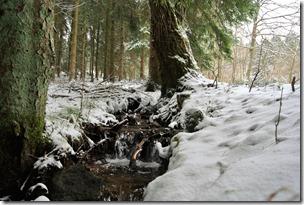 Rothaarsteig Spur Oberhundemer Bergtour -Winterbächlein