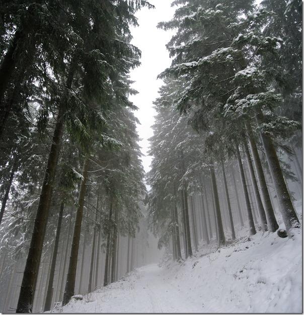 Rothaarsteig Spur Oberhundemer Bergtour -Nebel im Wald