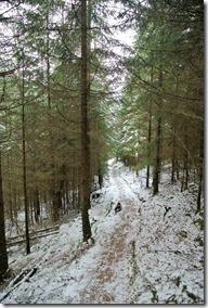 Rothaarsteig Spur Wisent-Pfad - Winterpfad