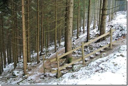 Rothaarsteig Spur Wisent-Pfad - Treppe im Wald