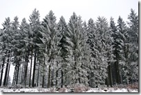 Rothaarsteig Spur Wisent-Pfad - Winterwald