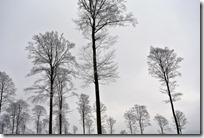 Rothaarsteig Spur Wisent-Pfad - Bäume und Himmel