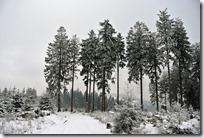 Rothaarsteig Spur Wisent-Pfad - Winterwald II