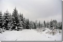 Rothaarsteig Spur Wisent-Pfad - Winterlandschaft