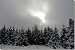 Rothaarsteig Spur Wisent-Pfad - Wolkenspiel